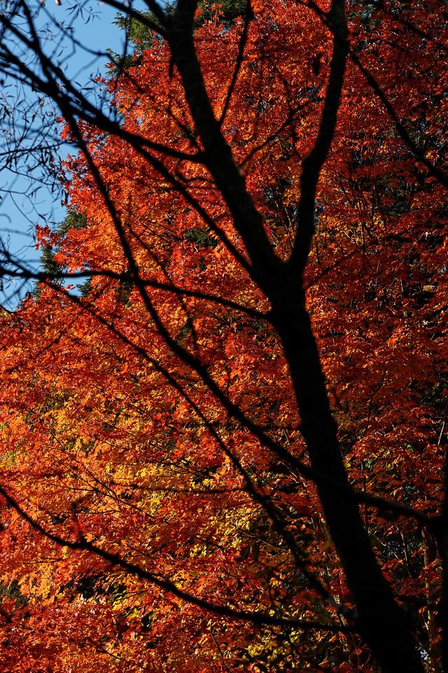 2010-10-10 - Edward Gardens - 56