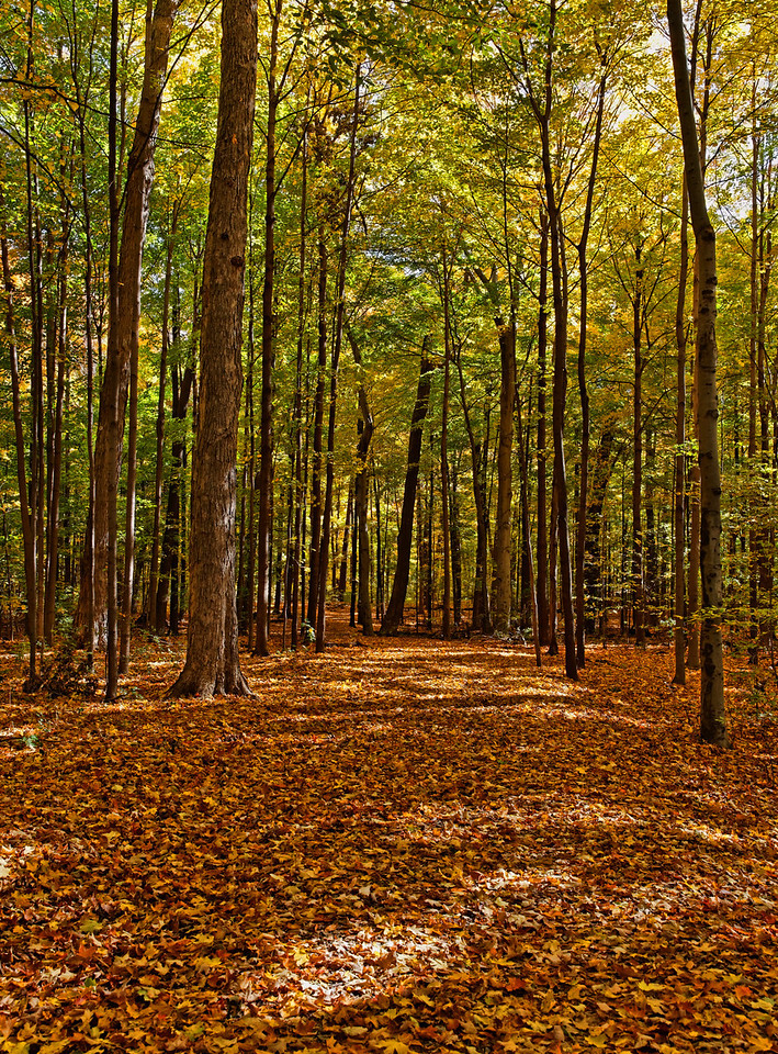 2010-10-16 - Thornhill Woods - 06