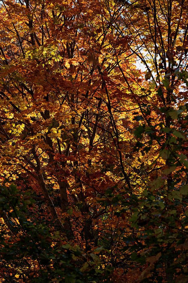 2010-10-10 - Edward Gardens - 52