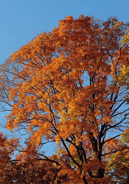 2010-10-10 - Edward Gardens - 23