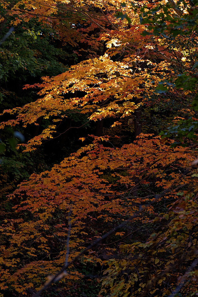 2010-10-10 - Edward Gardens - 51