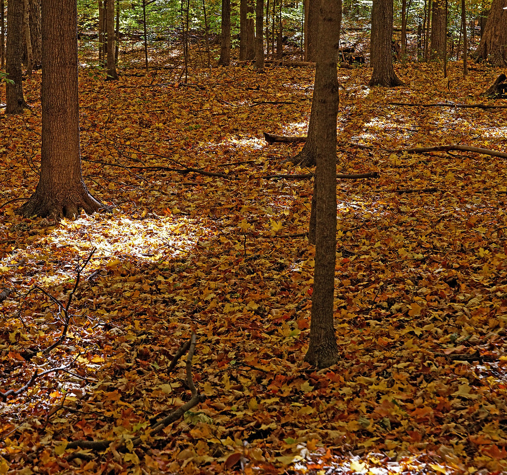2010-10-16 - Thornhill Woods - 07