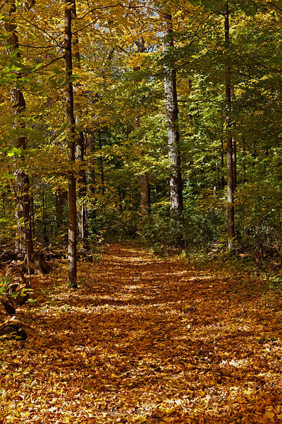 2010-10-16 - Thornhill Woods - 13