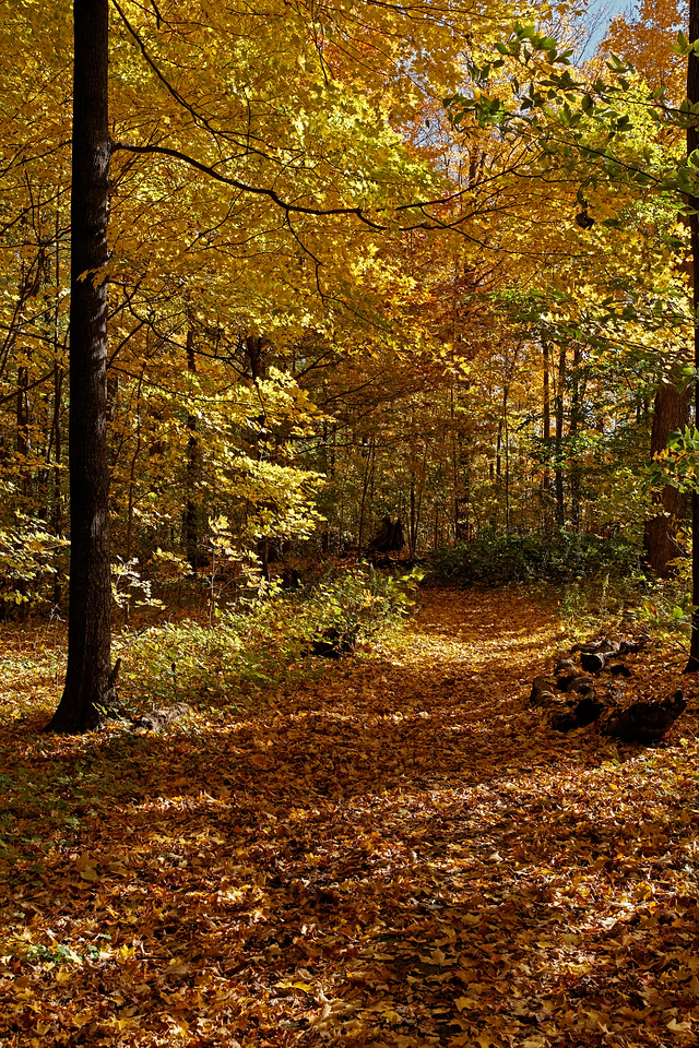 2010-10-16 - Thornhill Woods - 10