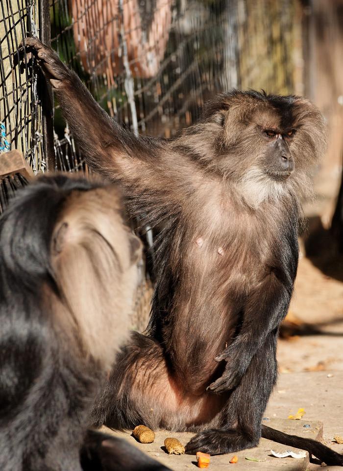 2010-09-20 - Toronto Zoo - 01