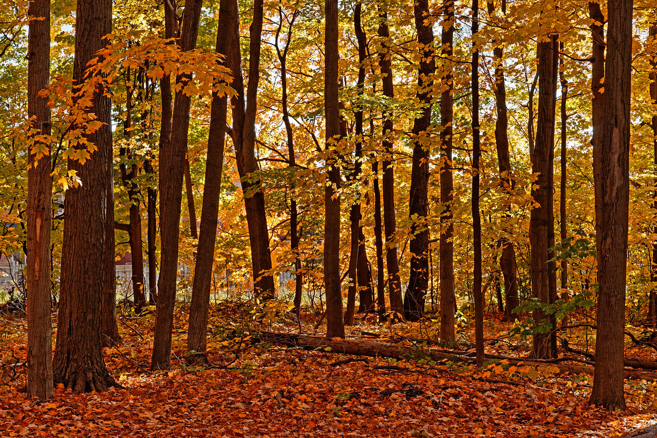 2010-10-16 - Thornhill Woods - 02