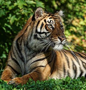 2010-09-20 - Toronto Zoo - 08