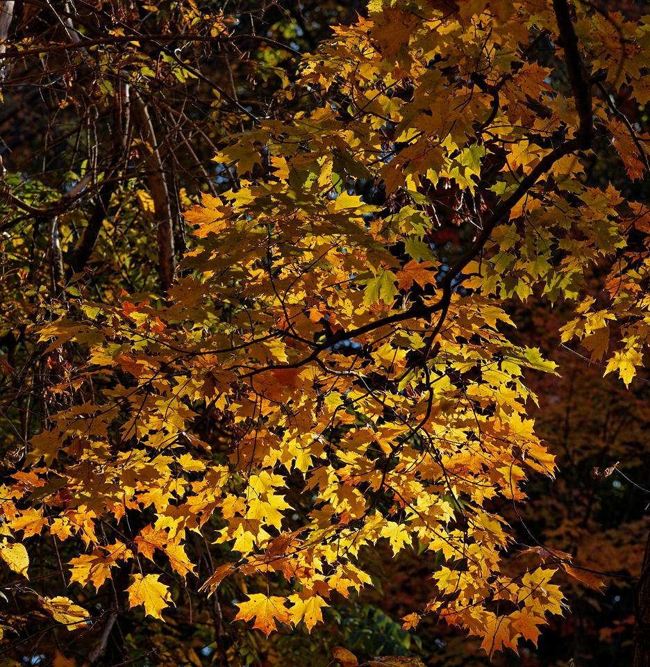 2010-10-10 - Edward Gardens - 77
