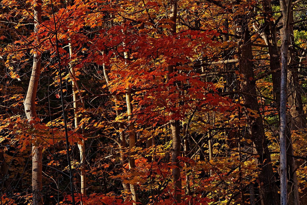 2010-10-10 - Edward Gardens - 33