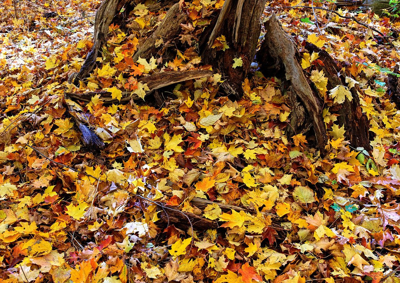 2010-10-16 - Thornhill Woods - 15