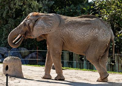 2010-09-20 - Toronto Zoo - 14