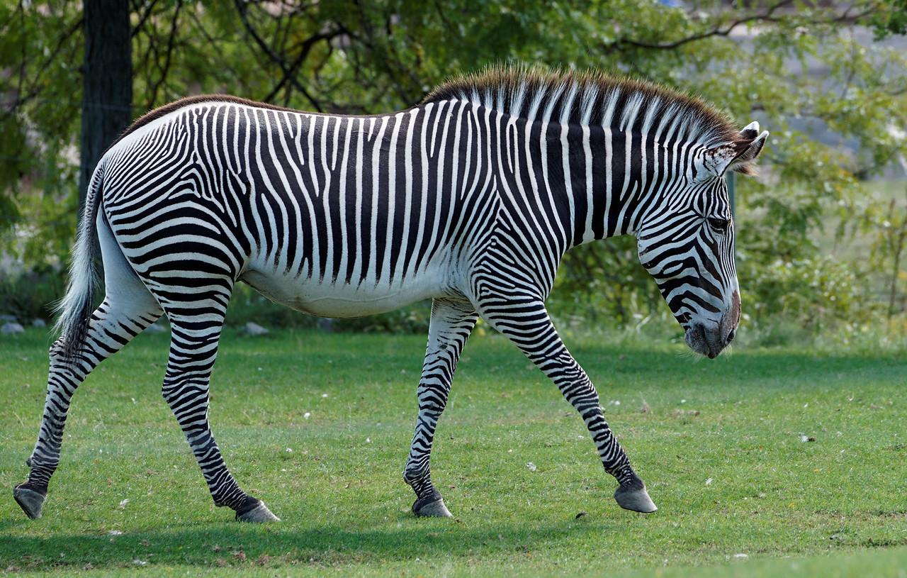 2010-09-20 - Toronto Zoo - 19