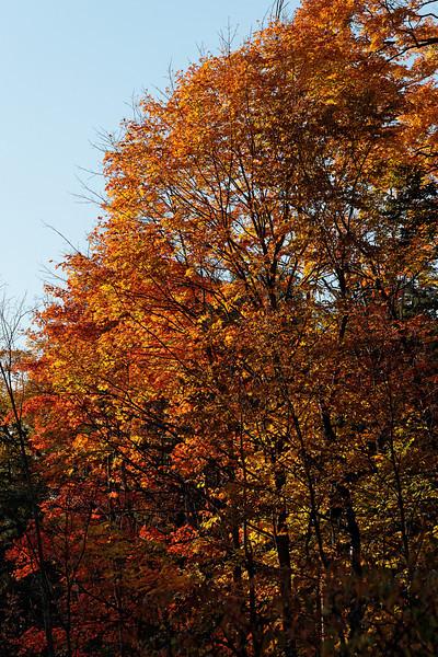2010-10-10 - Edward Gardens - 16