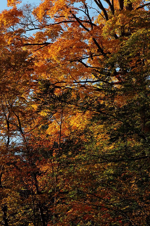 2010-10-10 - Edward Gardens - 17