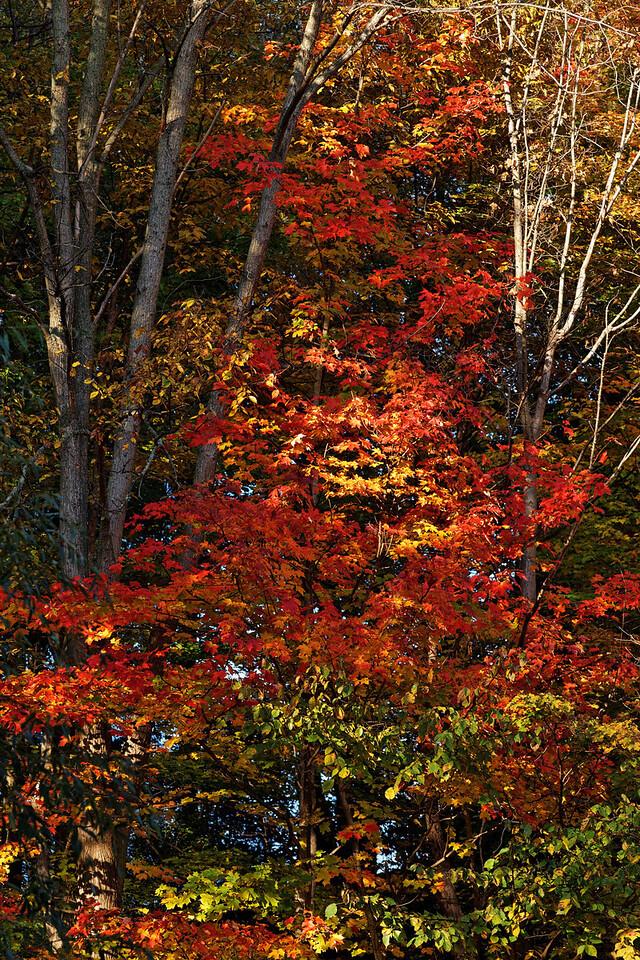 2010-10-10 - Edward Gardens - 20