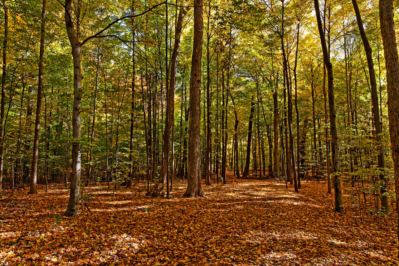 2010-10-16 - Thornhill Woods - 05