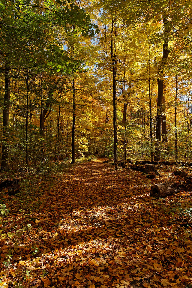 2010-10-16 - Thornhill Woods - 09