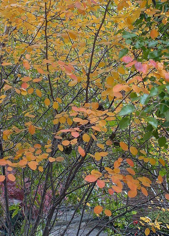 Autumn 2001 - 11