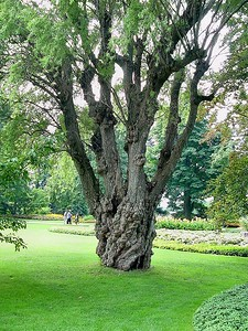 Botanical Gardens 12