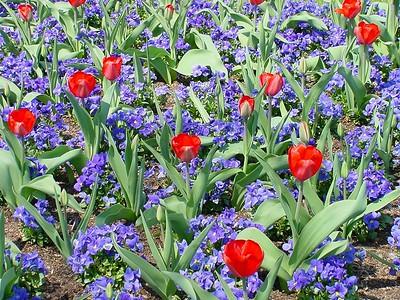 Botanical Gardens 03