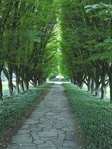 Botanical Gardens 09