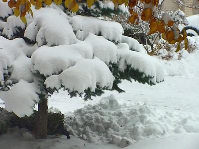 Winter 11