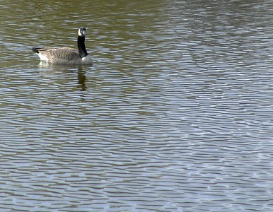 Apr 24 - On the Pond 4