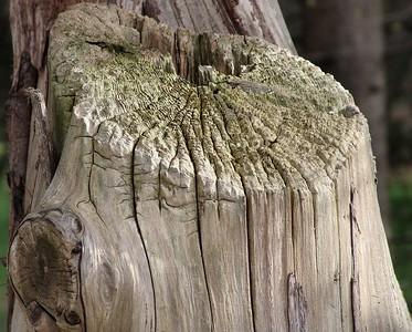 Old and Gnarled