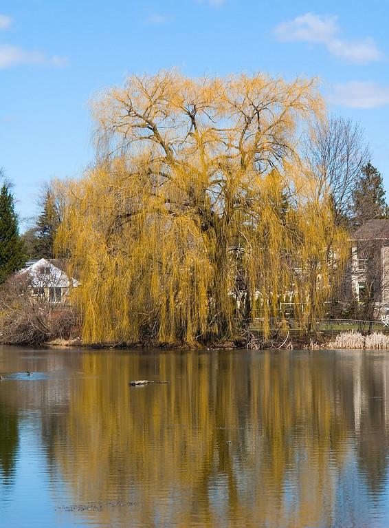 Oakbank Pond 9 April - 02