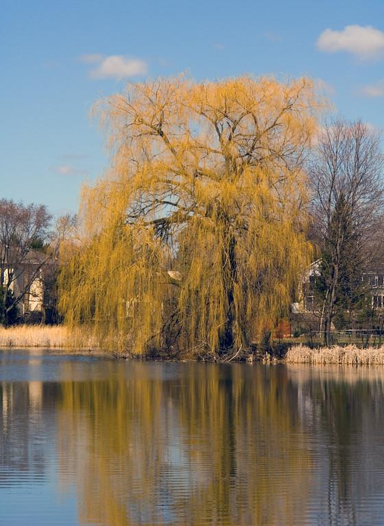 Oakbank Pond 9 April - 03