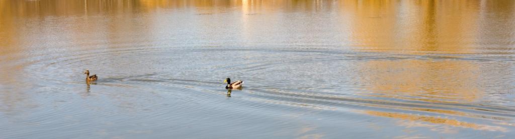 Oakbank Pond 9 April - 07