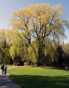 Edward Gardens May 7 - 03