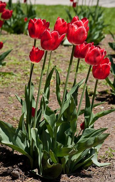 Edward Gardens May 17 - 26