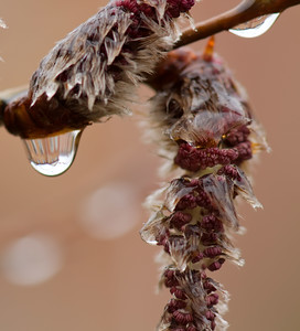 Spring - Home in Raindrops - 03