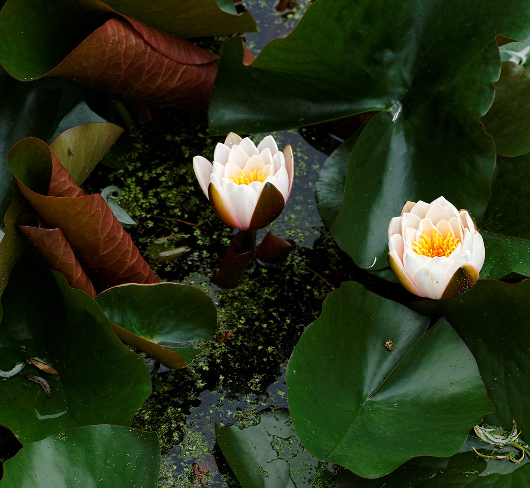 2011-06-29 - Niagara Botanical Gardens - 045