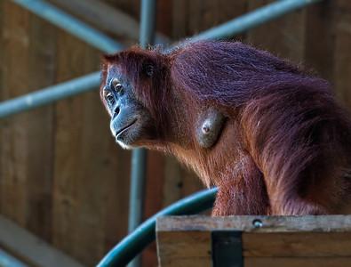 2011-06-02 - Toronto Zoo - 026