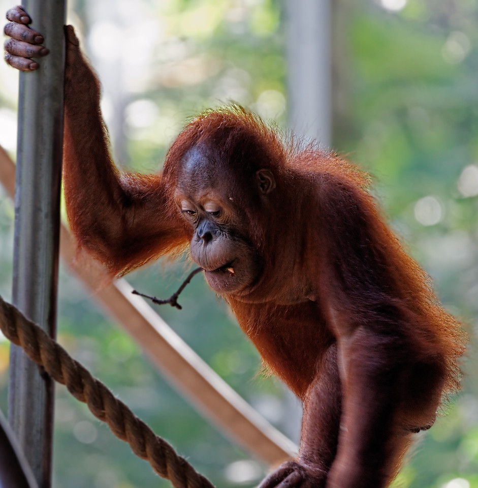 2011-06-10 - Toronto Zoo - 015