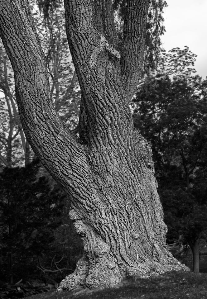 2011-06-12 - Edward Gardens - 014a