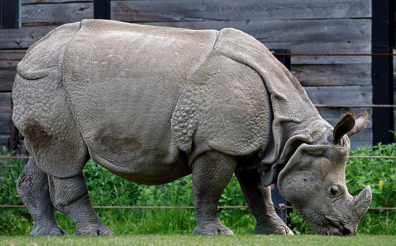 2011-06-02 - Toronto Zoo - 014