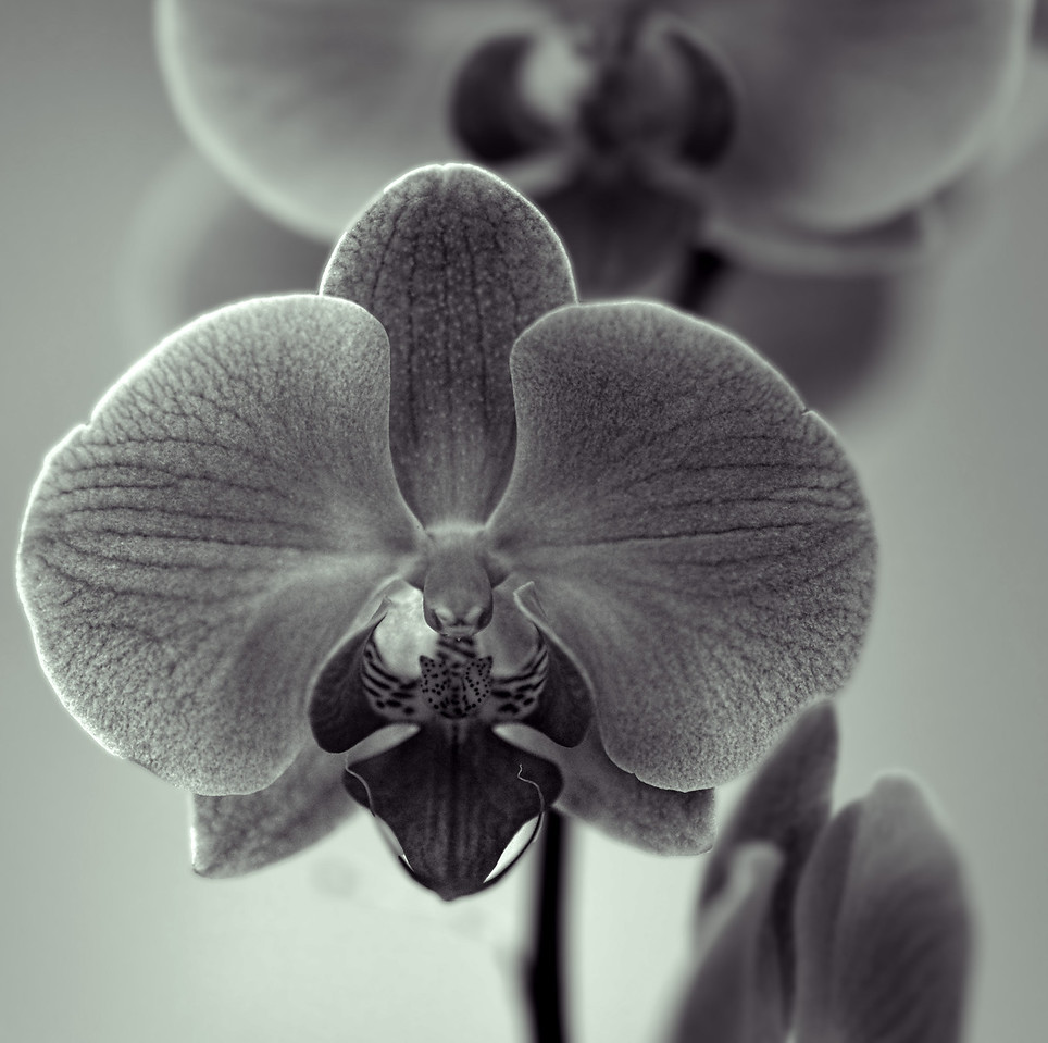 2011-10-02 - Monochrome - 002