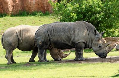 2011-06-10 - Toronto Zoo - 025