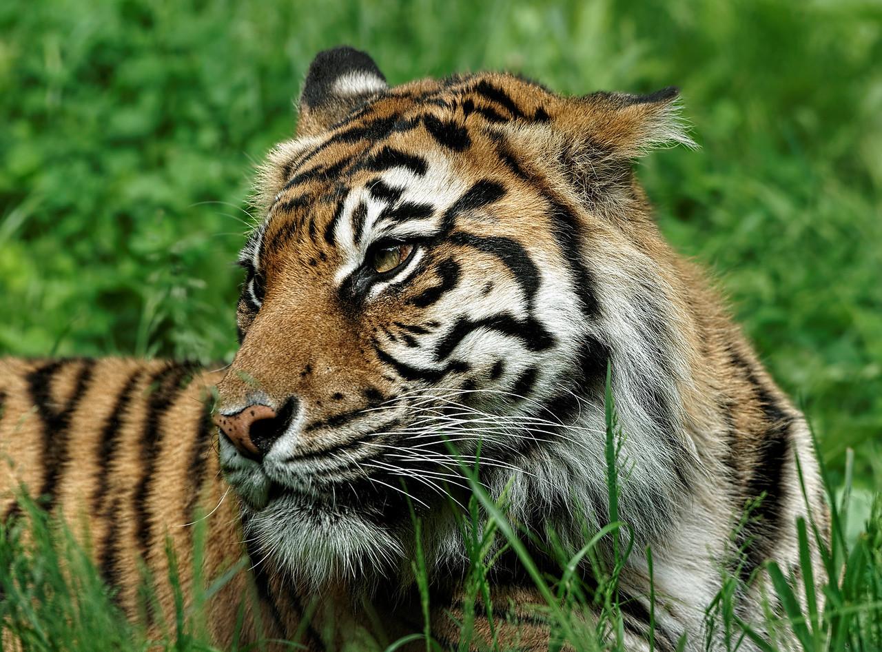 2011-06-02 - Toronto Zoo - 021