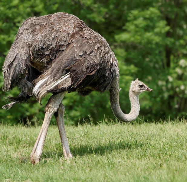 2011-06-10 - Toronto Zoo - 030