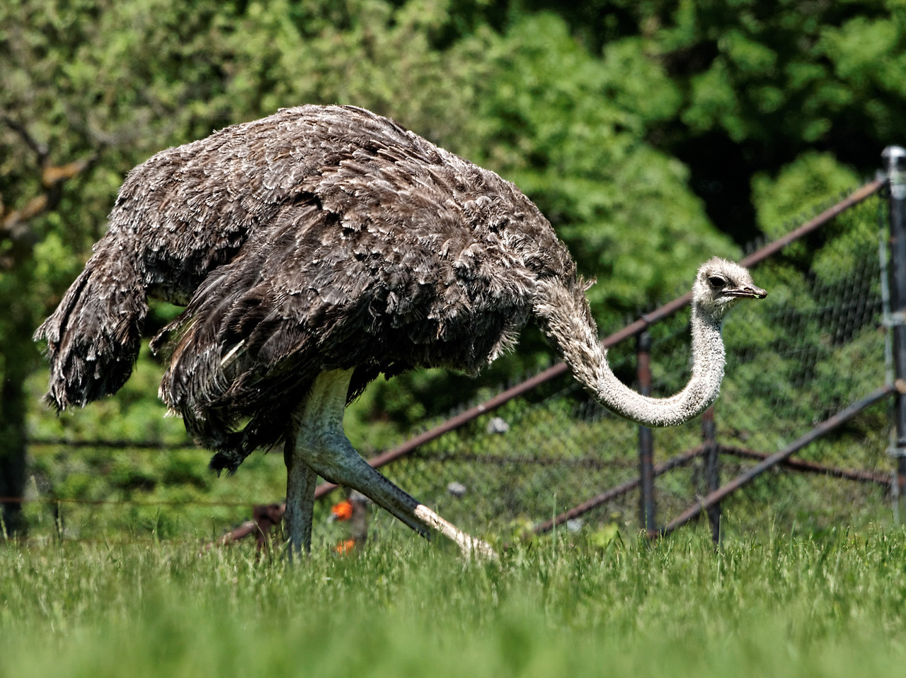 2011-06-02 - Toronto Zoo - 005