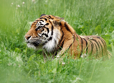 2011-06-02 - Toronto Zoo - 019