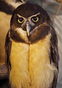 2011-06-10 - Toronto Zoo - 041