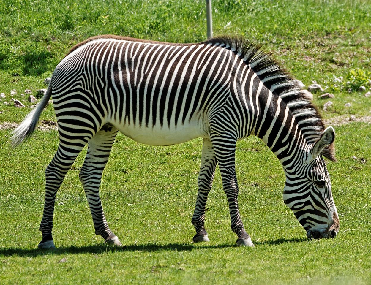 2011-06-02 - Toronto Zoo - 001