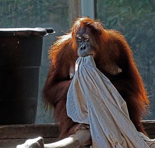 2011-06-10 - Toronto Zoo - 012