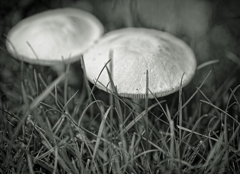 2011-10-02 - Monochrome - 004