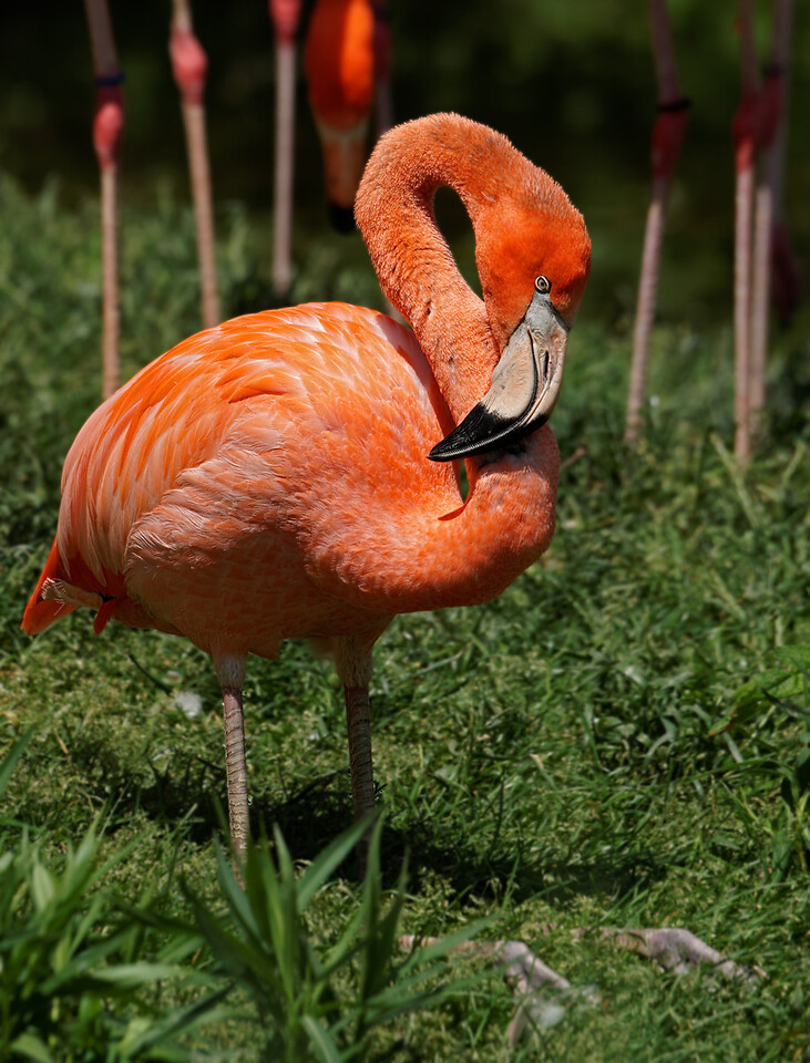 2011-06-10 - Toronto Zoo - 046